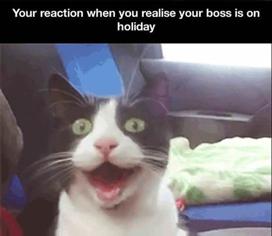 funny cat face boss vacation