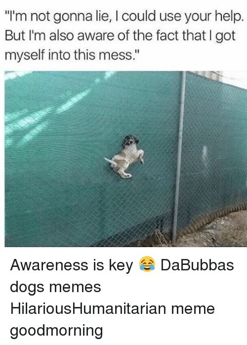 Take the Suprising Funny Dog Memes Watching You