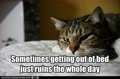 bed lazy sleep Cats