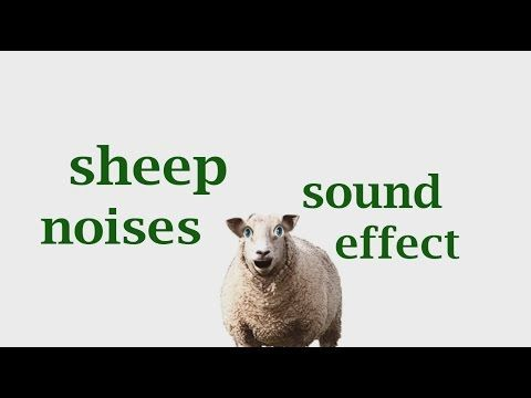 Sheep Noises SoundEffect