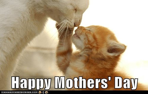 kitten cute mothers day