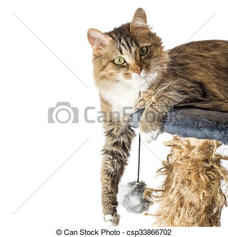 Cat resting cat on a sofa in isolate background cute funny cat close up young playful cat on a bed domestic cat relaxing cat cat resting