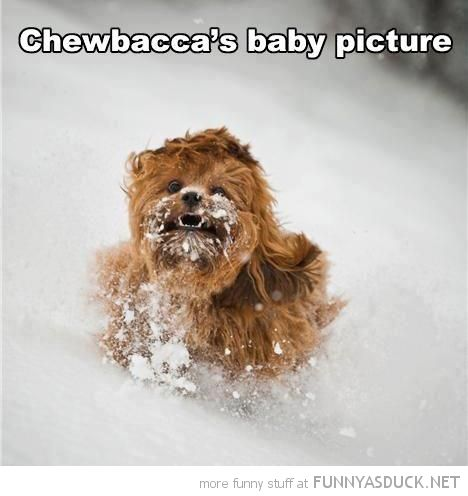 funny dog running snow chewbaccas baby star wars