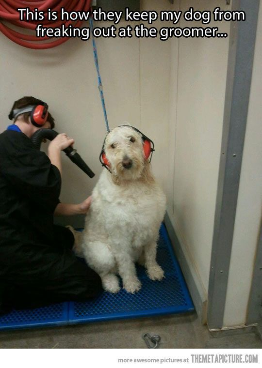 How to keep dog from freaking out at the groomer DOG GROOMING Pinterest