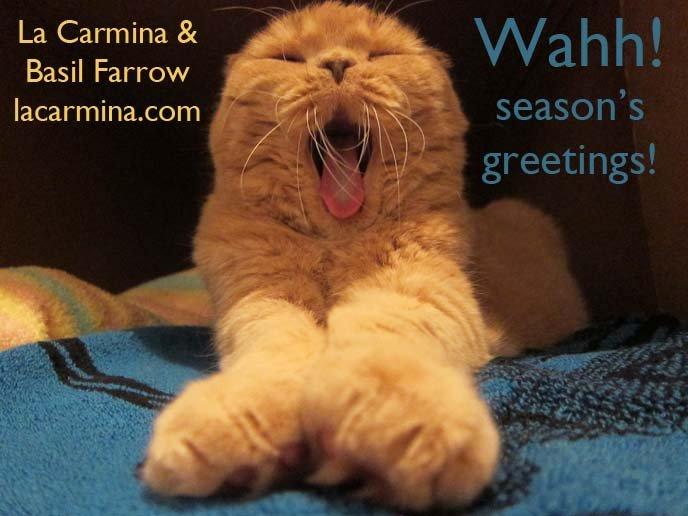 scottish fold cat cutest cat ever cutest cat in the world cat yawning