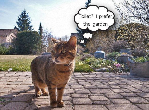 cat using garden as a toilet