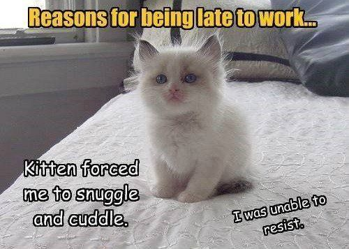 Coupon for $1 OFF on New ACT Advanced Care Cat Work Cat Humour Crazy