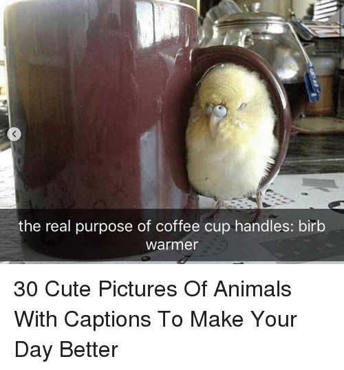 Animals Cute and Coffee the real purpose of coffee cup handles birb