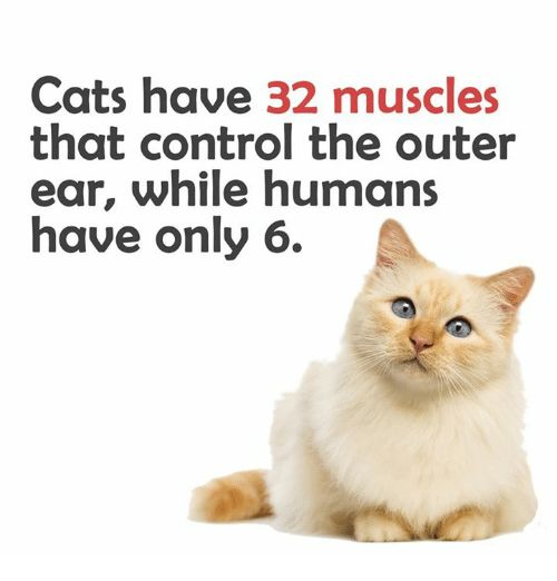 Memes Control and Humanity Cats have 32 muscles that control the outer ear