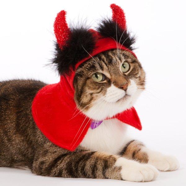 Cat Halloween Costumes Funny Cat