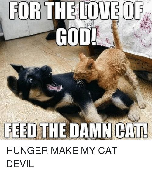 Funny God and Love FOR THE LOVE OR GOD FEED THE DAMN HUNGER MAKE MY CAT DEVIL
