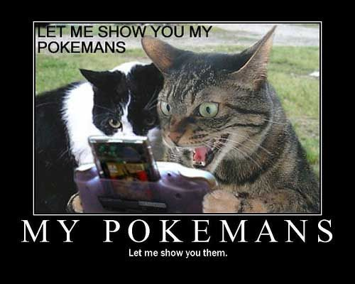Funny cats top 35 most funniest cat quotes 2
