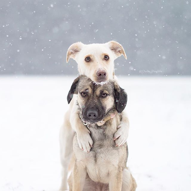 """A hug can keep you warm "" writes daily doglife"
