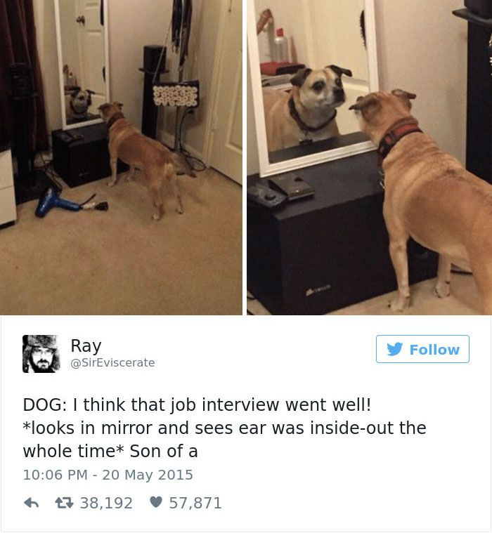 6 18 Funny Dog Tweets For The Dog Lovers Out There
