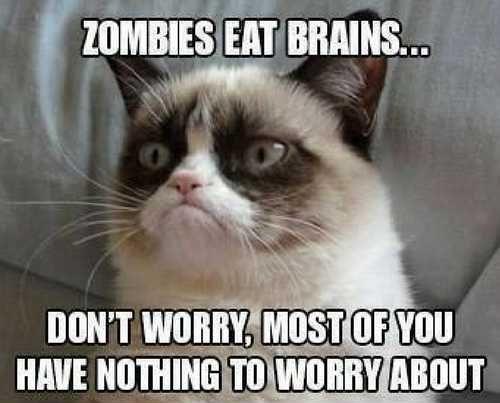 Funny cat memes