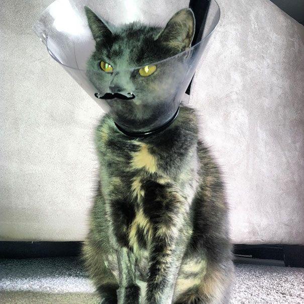 funny pet cones creative elizabethan collars 3
