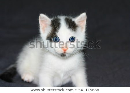 funny little white cat with black dots