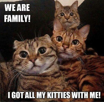 Funny Cat Memes I got all the kittens with me