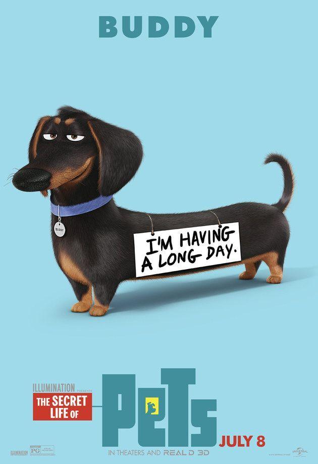 Pets A Vida Secreta dos Bichos The Secret Life of Pets Daschund Dachshund