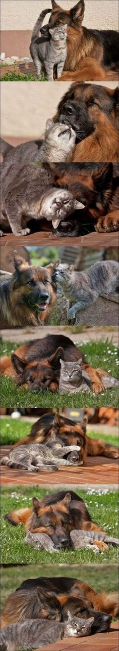 Best friends Unusual Animals Animals Beautiful Unusual Animal Friendships Cute Animals