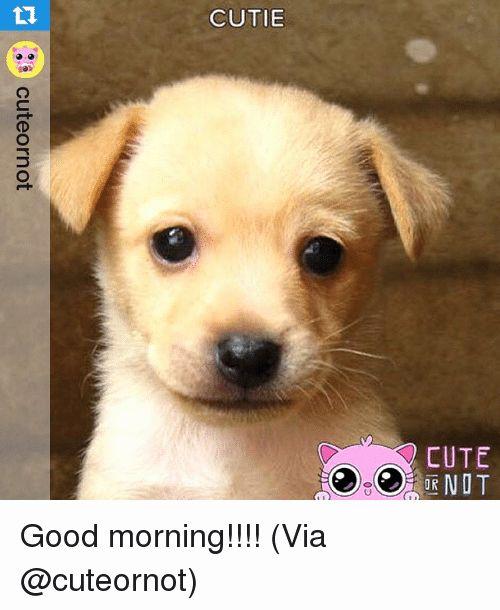 Cute Dogs New Dog Cutie 10h Cute 0d Cuteornot Good Morning Via Hd Wallpaper