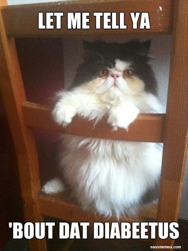 funny diabetes cat