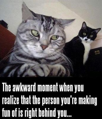 funny cat meme with a striped cat looking over his shoulder at a black and white cat and the caption the awkward moment when you realize tha