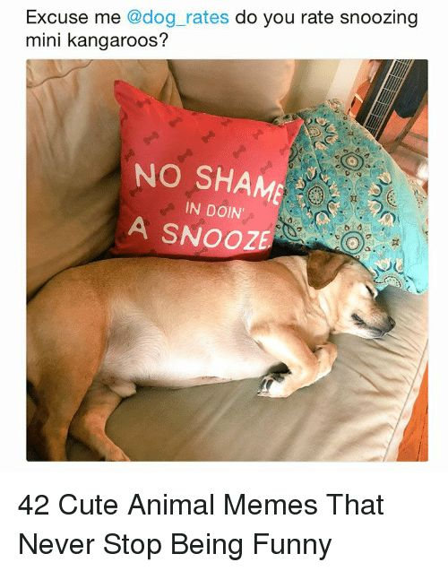 Cute Funny and Memes Excuse me dog rates do you rate snoozing mini