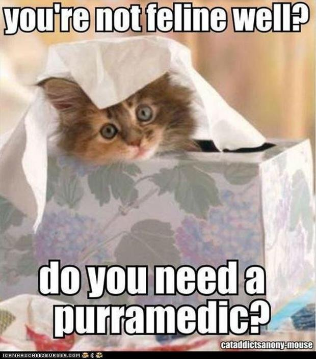 cats funny sick pictures