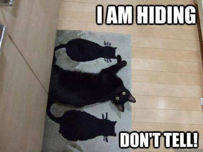 I am hiding cat meme