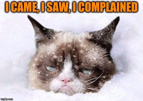 Grumpy cat snow
