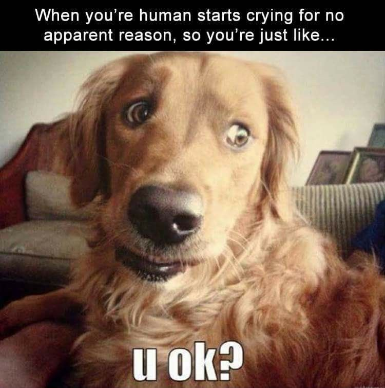 Cute Funny Animals Funny Animal Funny Dogs Funny Animal Memes Dog