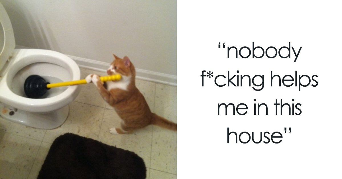20 Cat Posts Tumblr That Are Impossible Not To Laugh At