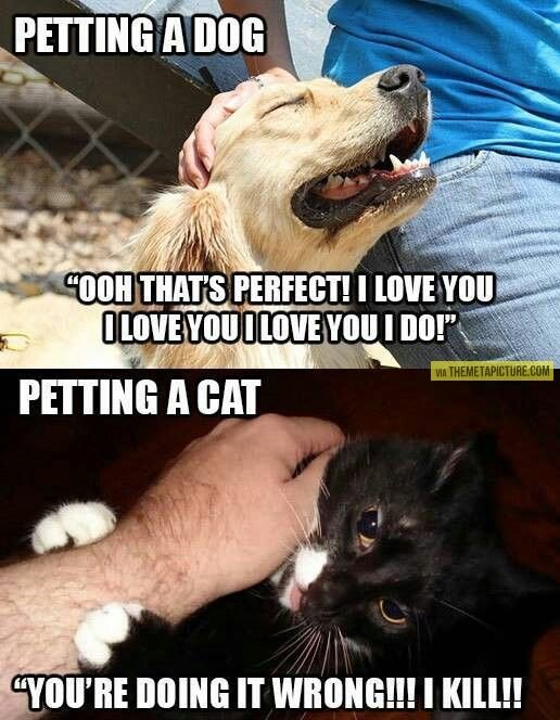 Petting a dog vs petting a cat… humor funny