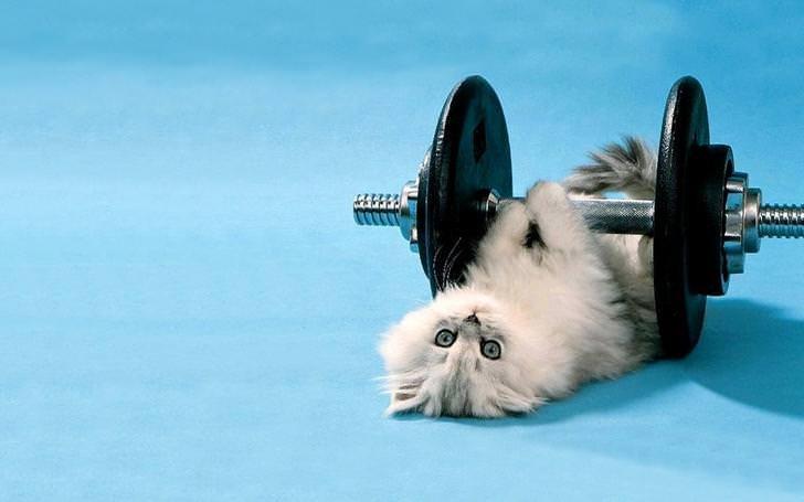 Funny Cat Gym Wallpaper