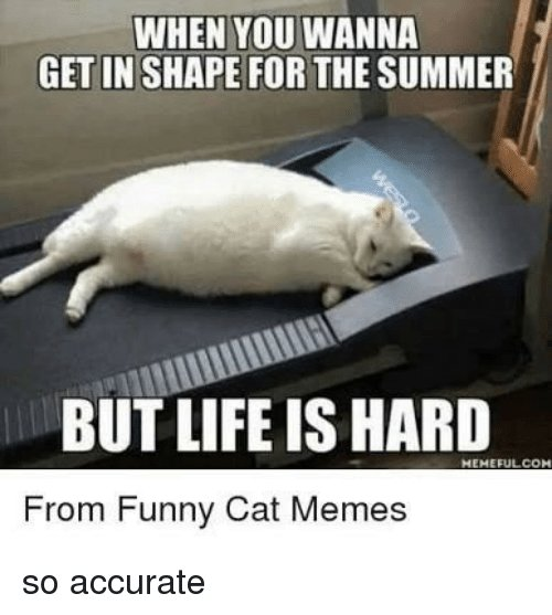 Funny Life and Memes WHEN YOU WANNA GET IN SHAPE FOR THE SUMMER BUT LIFE IS HARD MEMEFULCON From Funny Cat Memes