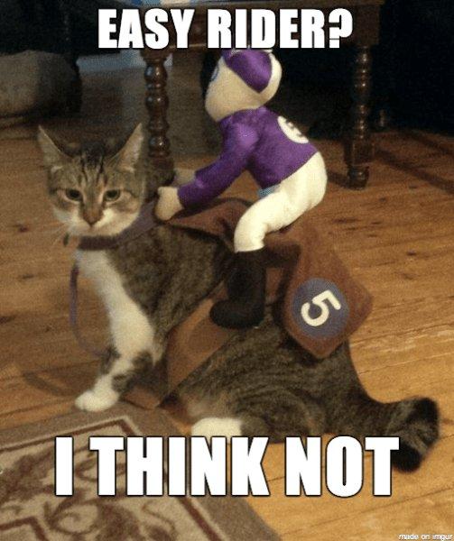 Funny Halloween Memes Cat