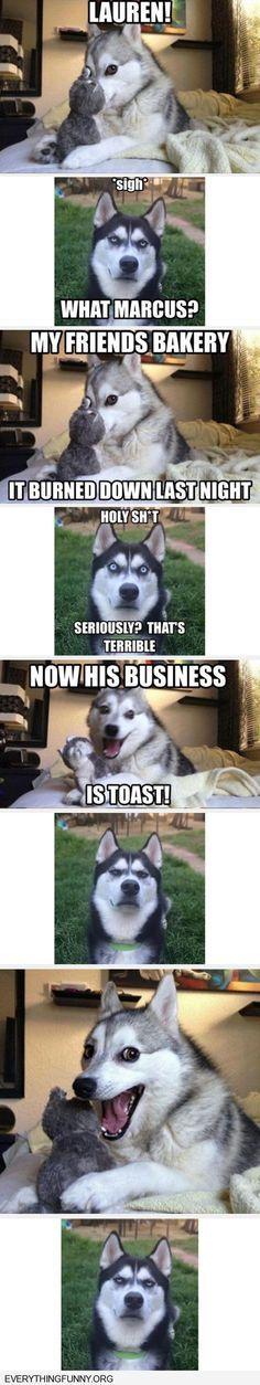 funny dog joke meme with angry husky Humor Animal Funny Animal Memes Cute Funny