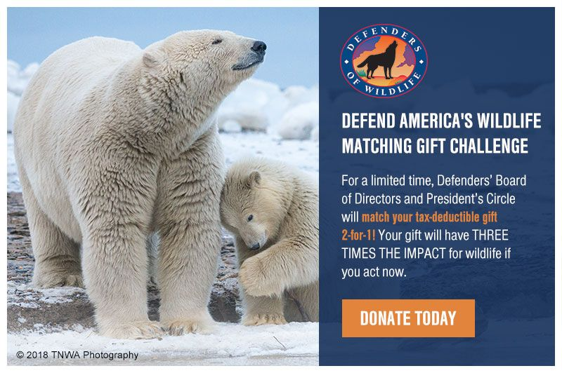 Defend America s Wildlife Matching Gift Challenge For a limited time Defenders Board of
