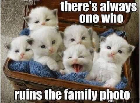 Theres Always e Who Ruins The funny memes animals cats jokes story meme funny quote funny quotes funny sayings joke hilarious humor stories