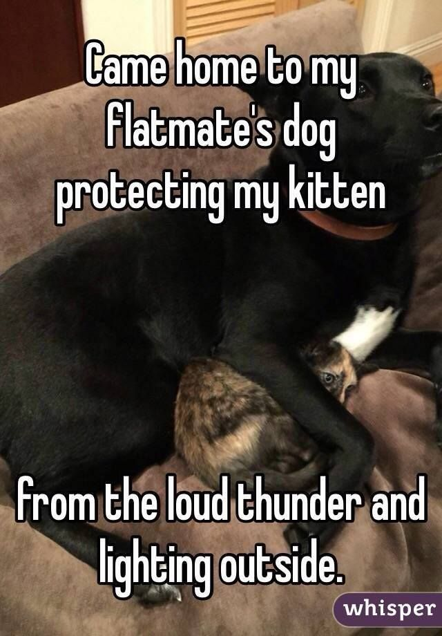 Lol Dogs are great protectors as is my big shepherd but he s chicken when it