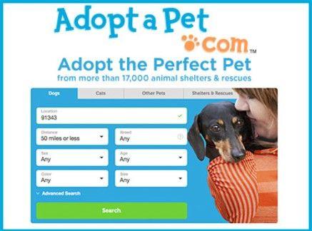 Adopt A Pet Search
