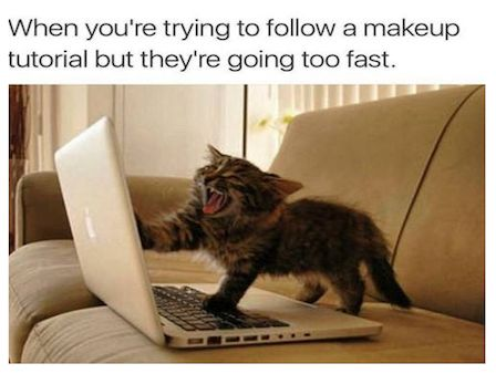 Purrfectly Funny Cats Memes To Brighten Your Caturday