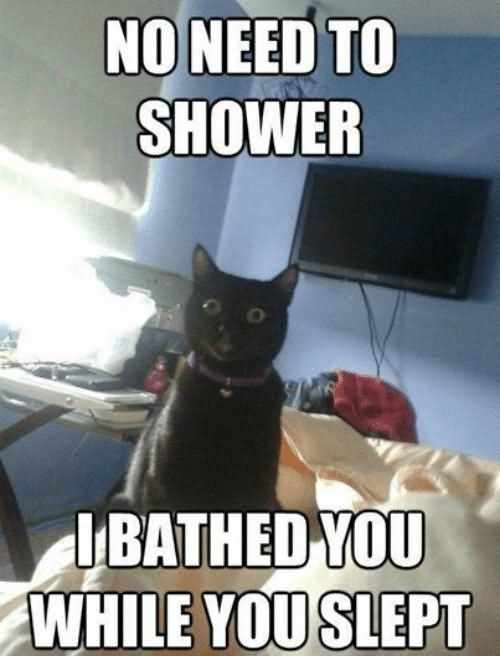 VERY FUNNY GRUMPY CAT MEME IMAGE