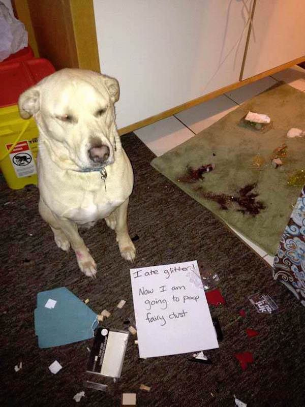pet shaming is the most adorable and ical punishment xx photos 7 Dog shaming is the most adorable and ical punishment 34 s fun…