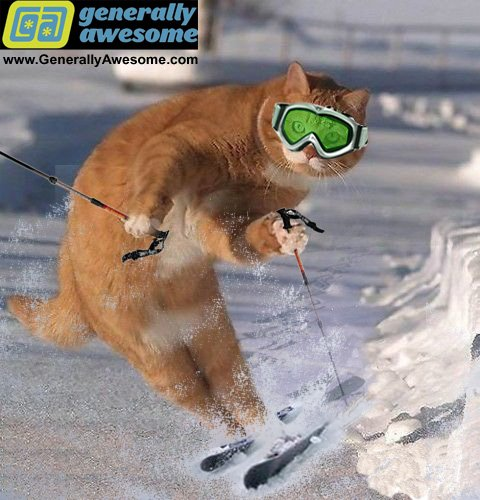 This kitten is enjoying a winter sport activity Funny that this cat should choose skiing