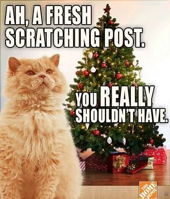 Without Cat Fun this Funny Christmas Memes Album is in plete AH A Fresh Scratching Post You really Shouldn t Have
