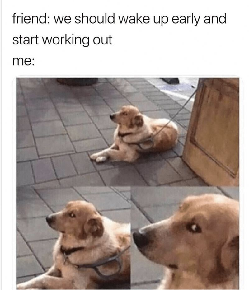 Happy weekend y all Here s a roundup of excellent random memes for you DogMeme RandomMemes FunnyMemes InterestingThings