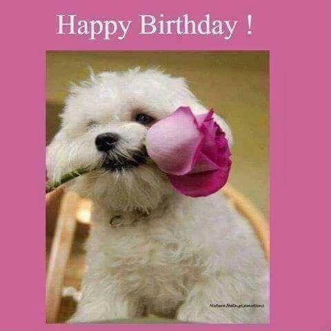 Theresa Happy Birthday Courtney Happy Birthday Woman Happy Birthday Funny Happy Birthday