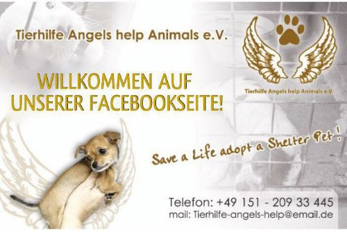 Memes Mail and 🤖 Tierhilfe Angels help Animals e V WILLKOMMEN